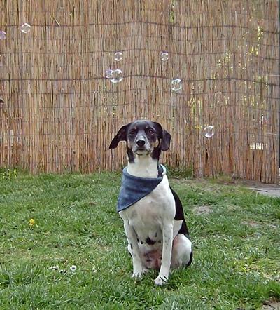 Hunde Seifenblasen fotografieren