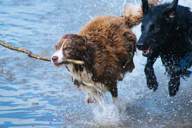 Warm up beim Hundesport