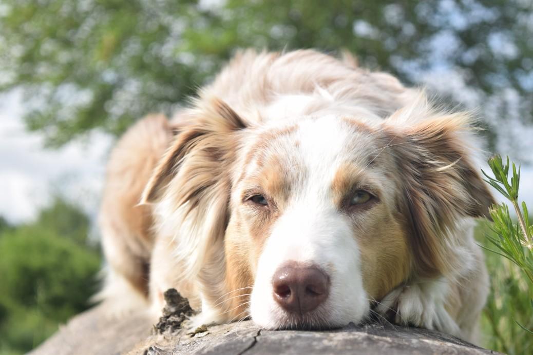 Der perfekte Hundehalter