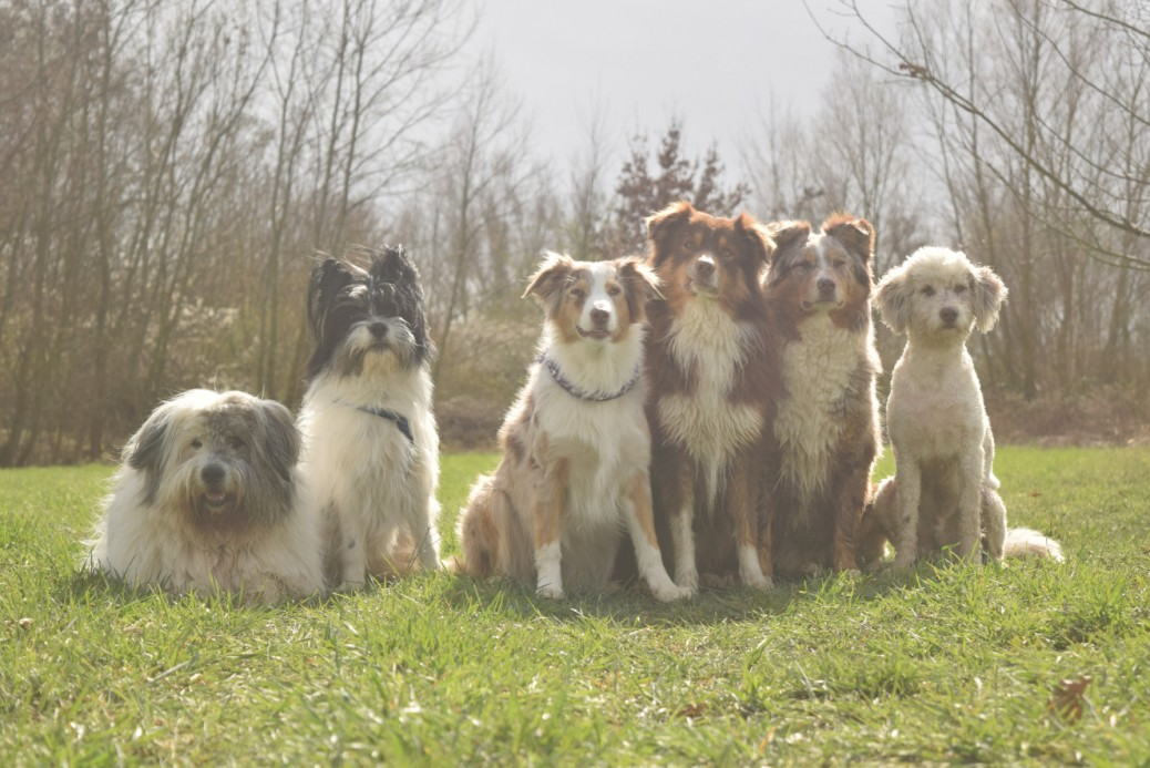 Hundefotografie viele Hunde