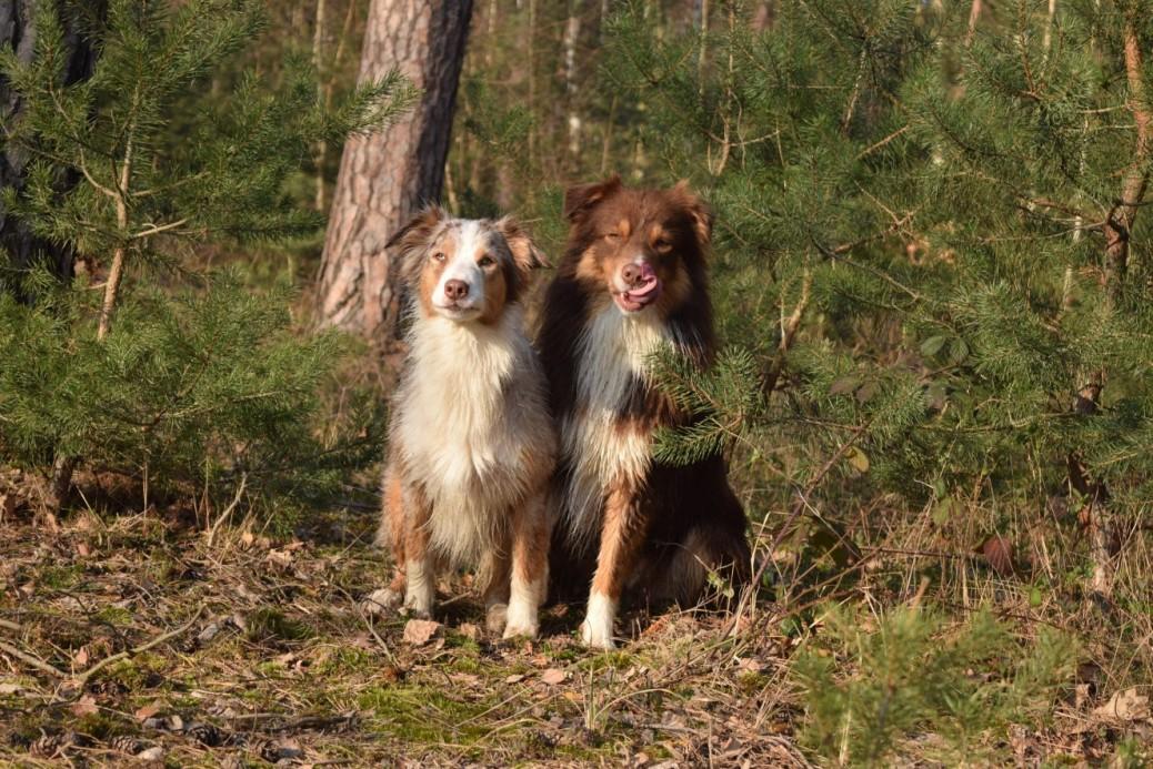 Geschichten junger Hunde