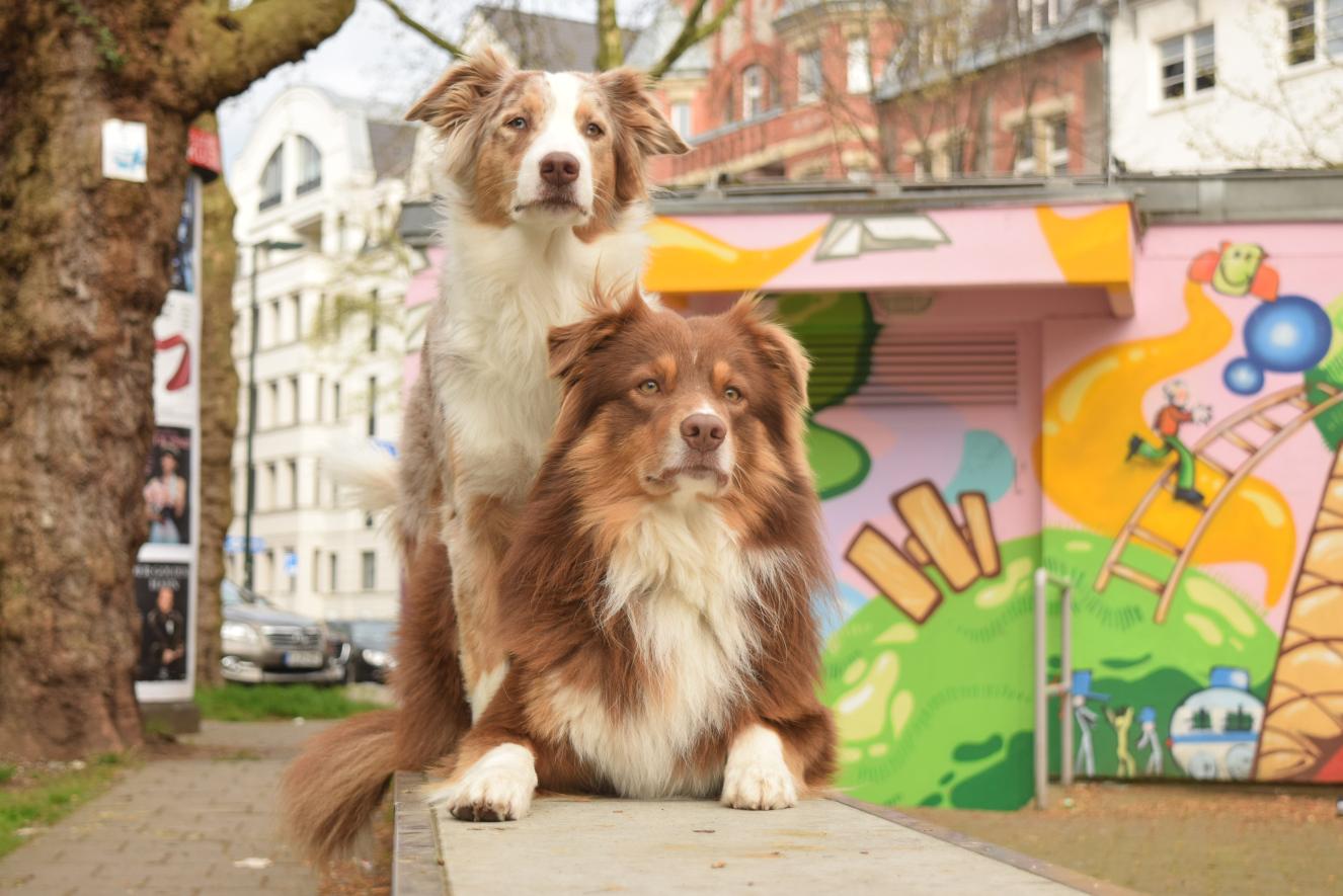 Hunde in der Großstadt