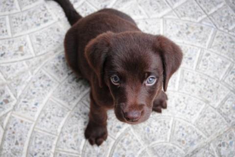 Ellbogendysplasie (ED) beim Hund – was bedeutet das für deinen Vierbeiner?