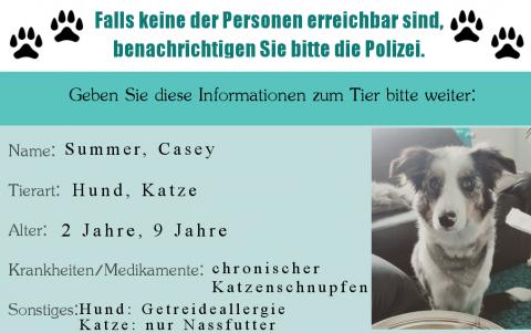 Was passiert mit dem Hund, wenn der Mensch verunfallt? Notfallplanung inkl. Benachrichtigungskarte