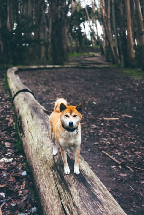 So geht aktives Warm Up beim Hund – Teil 2