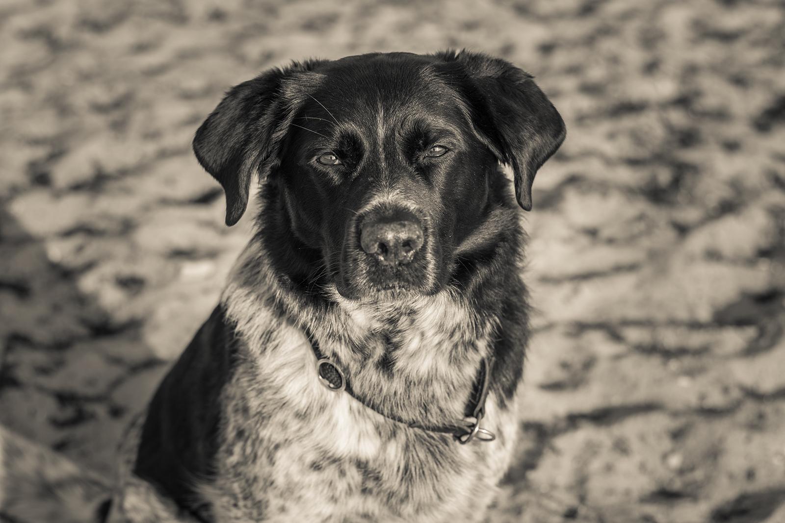 11 Fakten gegen Hunde Humor