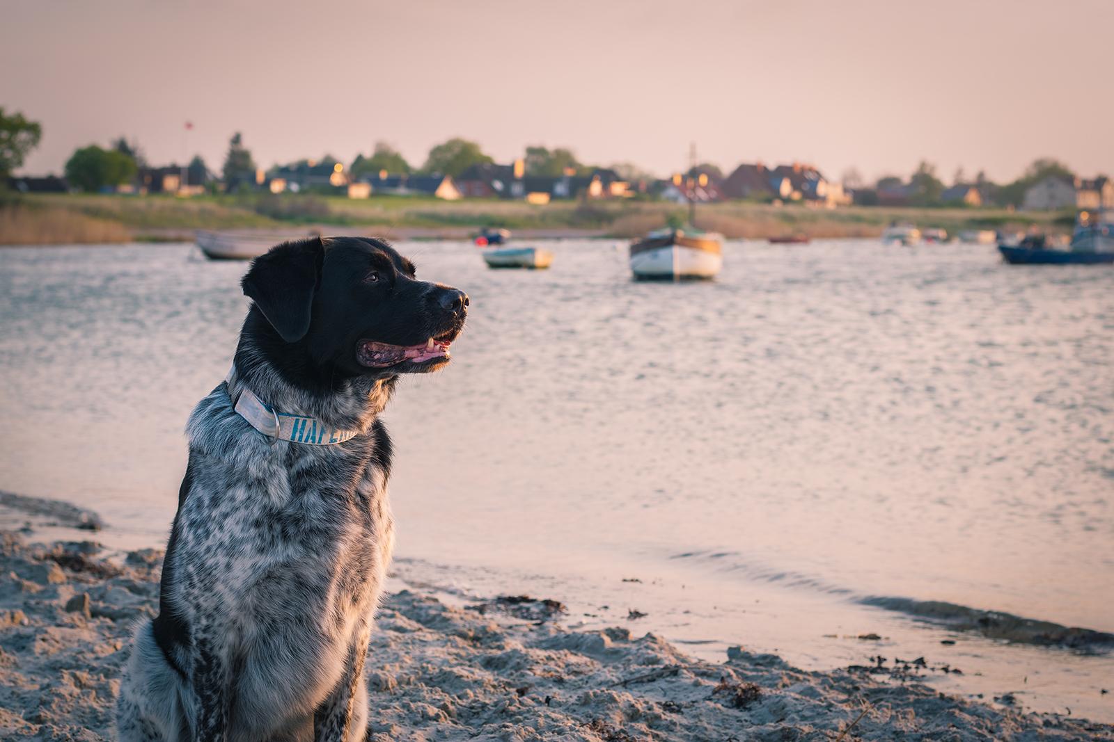 Geocaching mit Hund Eidertal