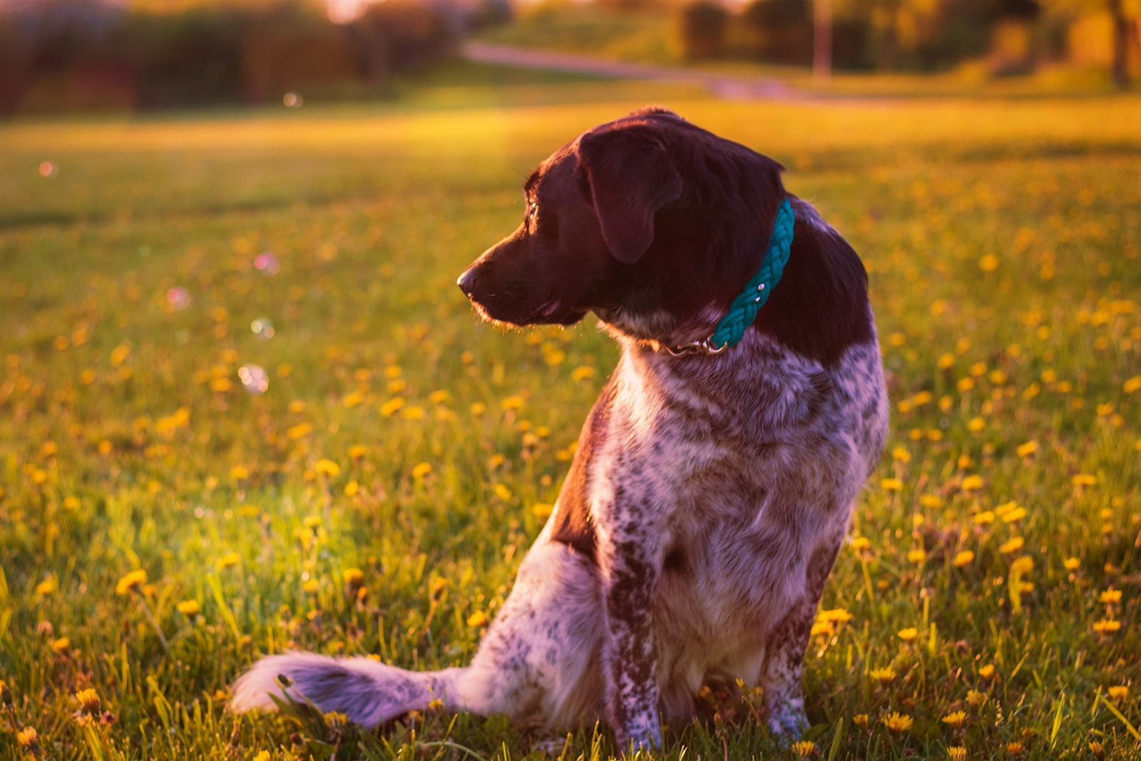 Hundefotografie Seifenblasen
