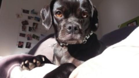 [midoggy – Blogparade] Hund im Bett , ja oder nein?