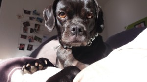 [midoggy - Blogparade] Hund im Bett , ja oder nein?