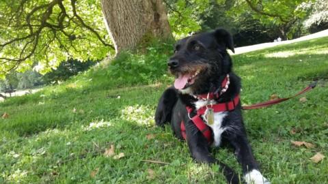 Hunde Flöhe Erfahrungen