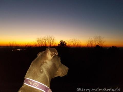 Wenn ein Hund ein ganzes Leben verändert