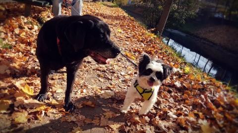 Besuch von Labradorhündin Lena