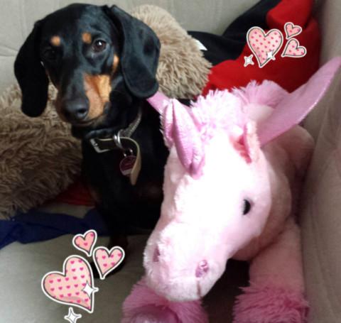 Der Dackel und sein kleiner rosa Freund