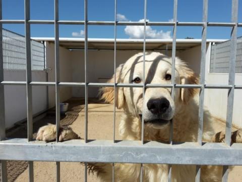 Besuch eines Tierheims auf Sardinien