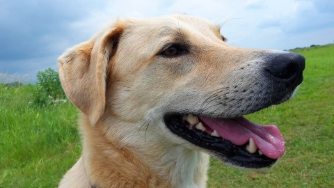 Bach-Blüten für Hunde (Scleranthus – Vine) – Teil 7