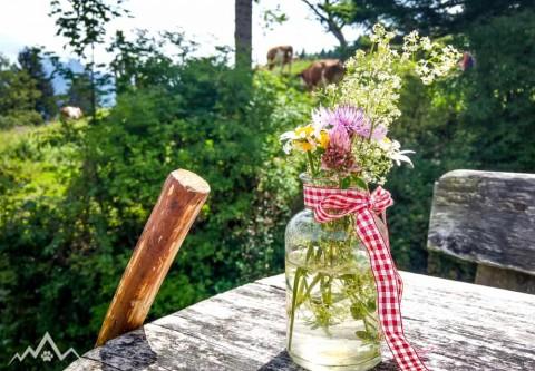Kulinarische Wanderung mit Hund entlang saftig grüner Almwiesen zur Rachelalm und Hefteralm mit Chiemseeblick