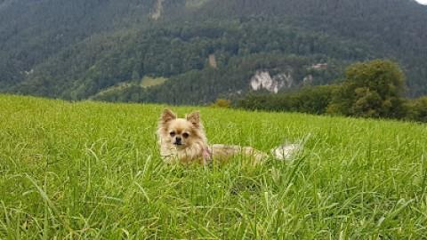 Cocos Diary: Kurzurlaub Berchtesgadener Land – 07.09.2017