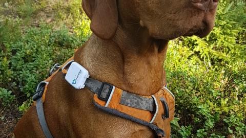 Tractive – dein GPS Tracker für dein Tier!