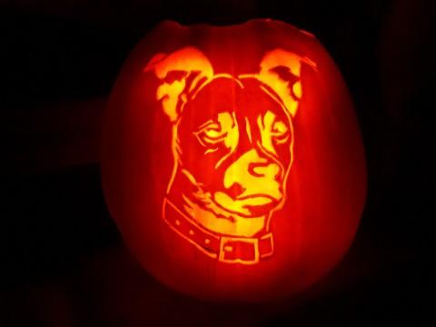 """""""Halloween – im Zeichen des Hunde-Kürbis"""""""