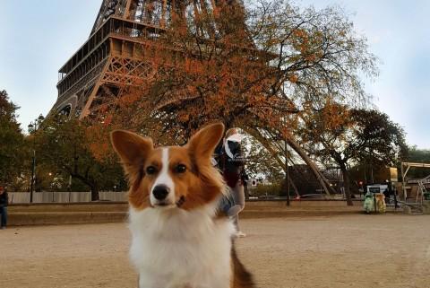 1x Frankreich und zurück – mit Kaya in Paris