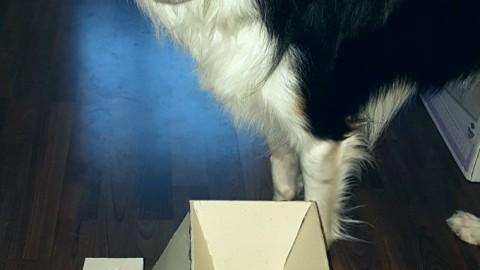 |DIY| Anleitung Leckerliepyramide