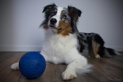 Indoor-Beschäftigungsideen [Teil 1] – Der Futterball