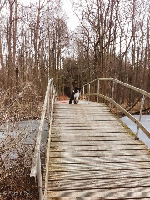 Urlaub mit Hund im Naturpark Stechlin (2/2)