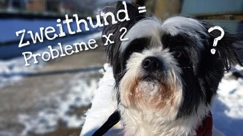 Zweithund = Probleme x 2?