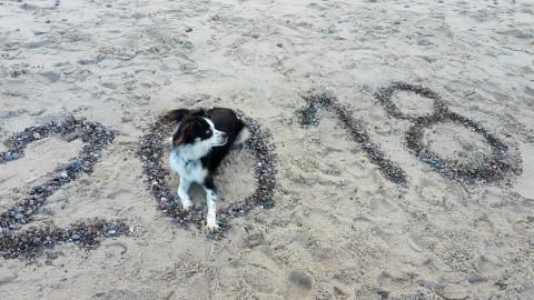 Silvester mit Hund an der polnischen Ostseeküste