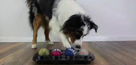 Indoor-Beschäftigungsideen [Teil 2] – Muffin Tin Game