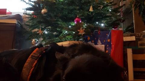 Die Weihnachtsauflösung