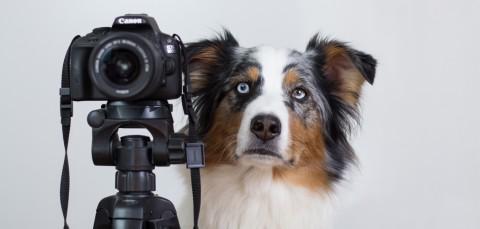 Tipps für schönere Fotos mit Einsteiger-DSLR und Kit-Objektiv