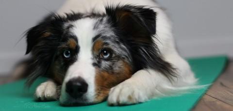 Wann ist Tierphysiotherape sinnvoll?
