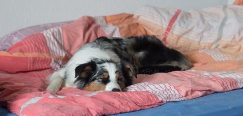 Ab ins Bett! Warum Hunde im Bett schlafen sollten