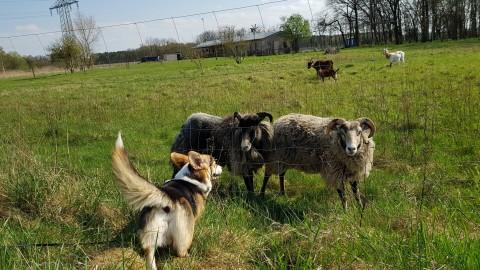Wie geht eigentlich Völkerverständigung – der Grinsehund und andere Spezies