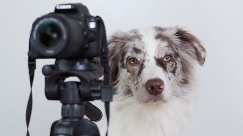 [Werbung] Mein ganzes Fotoequipment für tolle Hundfotos!