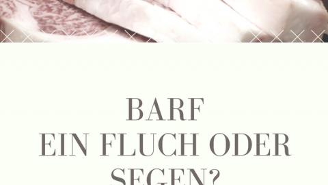 BARF – ein Fluch oder Segen?