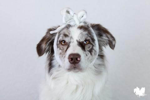 Was gehört alles in die Reiseapotheke für den Hund? [Werbung]
