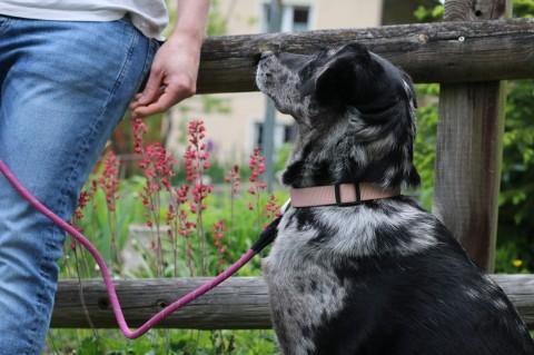 Mein Hund der Leinenpöpler
