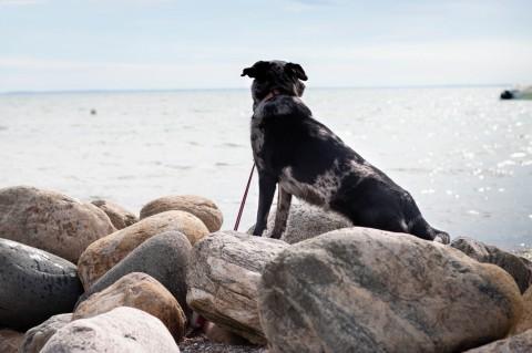 Deutschland und Dänemark mit Hund und Camper