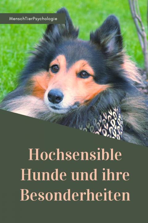 Hochsensible Hunde und ihre Besonderheiten