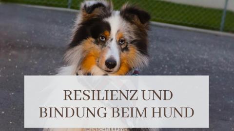 Resilienz und Bindung beim Hund