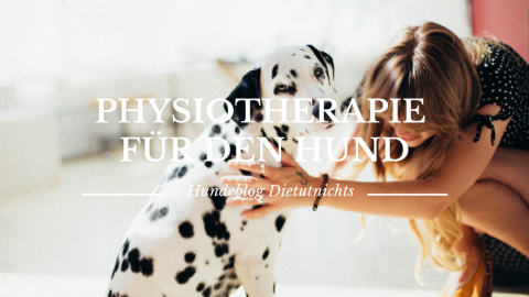 Physiotherapie für den Hund