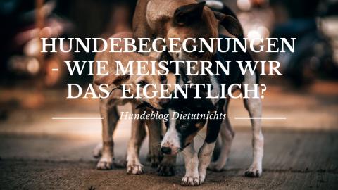 Hundebegegnungen – Wie meistern wir das eigentlich?