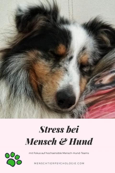Stress bei Mensch & Hund
