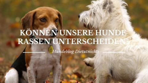 Können unsere Hunde Rassen unterscheiden?