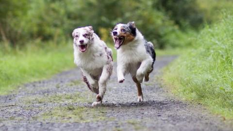 Wenn die eigenen Hunde sich plötzlich streiten
