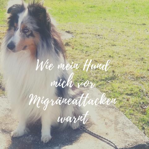 Wie mein Hund mich vor Migräneattacken warnt