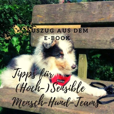 Tipps für (Hoch-)Sensible Mensch-Hund-Teams
